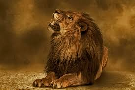 значение татуировки лев тату студия в москве