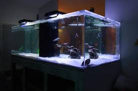 Image result for aquarium manufacturers offer acrylic tanks