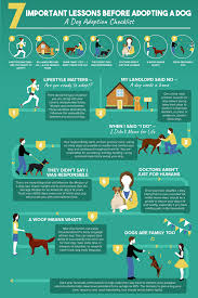 14 Dog Shelters Speak Out What You Should Know Before