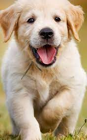 HD Wallpapers Cute puppy [1080x1920 ...