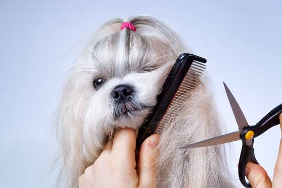 Trim your dog's hair
