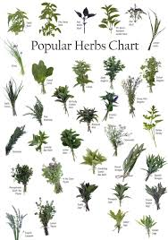 Herb Plant Identification Chart Identifying Herbs Powers Of Natural Herbs Health And