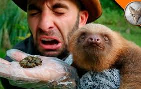 coyote peterson poops a sloth and it s pretty fascinating thrillist watching a sloth poop is actually incredibly interesting