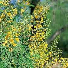 desert plants flowers.  Flowers Landscape Plants For The Arizona Desert  Municipal Water Users  Association Intended Flowers N