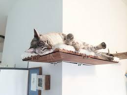 Corner Cat Shelves Catastrofic Creations Cat Shelving 70