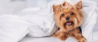 the best sheets for dog hair review