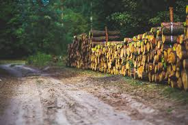 How Much Firewood Do I Need For Winter