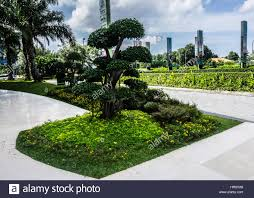 Small Picture Bonsai tree in a beautiful clean garden at Central Park Mall photo