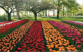 Beautiful Garden With Flowers Home Design Ideas Flower City And Trees Are