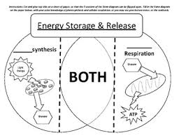 Venn Diagram Photosynthesis And Cellular Respiration Photosynthesis Vs Cellular Respiration Venn Diagram Study Cards