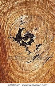 full frame image of a tree stump