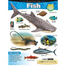 Exploring Fish Learning Chart