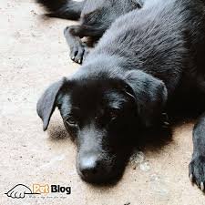 the signs for when dogs have nasal tumors are the decreasing need to eat nose bleeding letting out pus noisy breathing swelling nose or a bulge of the