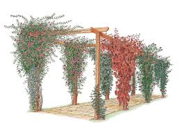 how to choose and maintain climbing plants diy related to plants pergolas gardening