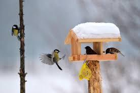 Ptáky ke krmítku přiláká slunečnice, jablka i tuková směs | Region