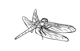 Small Picture FREE Dragonfly Coloring Page 6