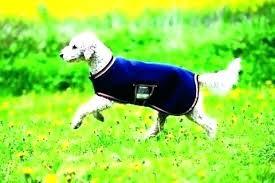 pet proof rugs best area for dogs dog chew waterproof carpet pad fleece rug pr pet proof area rugs
