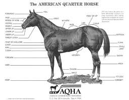 Conformation Selection For Performance Horses American