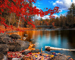 Windows Fall Theme Windows 8 1 Theme Hd Wallpapers Beautiful Autumn Leaves 13
