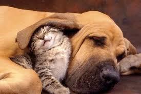 Противостояние кошки и собаки: миф или реальность | Статьи о кошках -  Zooshef