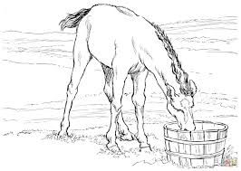 Small Picture Water Horse Coloring Pages Coloring Coloring Pages