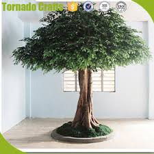 Trees Suppliers Ficus amp; Alibaba - Manufacturers Wholesale