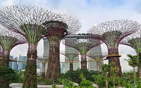 Tree Design British Architects Accuse Italians Of Plagiarism Over Tree Design