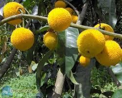 Fruits Giving PlantsKerala Fruit Trees