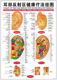Chinese Ear Chart Details About Chinese Chart Ear Reflective Zones Therapy Reflexology Massage Wall Pos