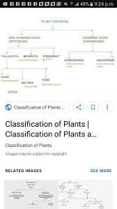 Classification About Plant Kingdom In Flow Chart Brainly In