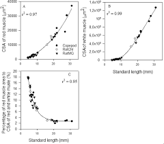 Murray Cod Growth Chart Skeletal Muscle Growth Dynamics And The Influence Of First
