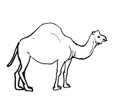 Small Picture Camel coloring pages for kids