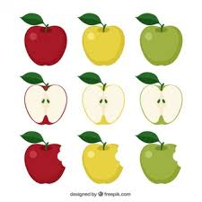 green apple fruit drawing. variety of apples green apple fruit drawing