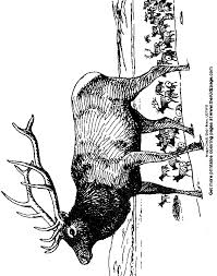 Small Picture Elk Free Coloring Pages for Kids Printable Colouring Sheets