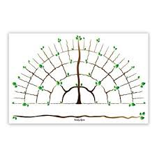 Amazon Com Branches Genealogy Chart Perfect For Family
