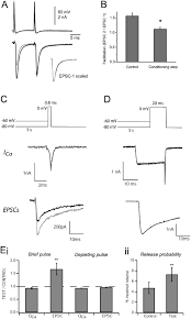 mv 443 form modulation of transmitter release by presynaptic resting potential