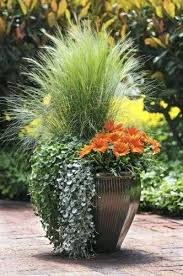 large container gardening container garden ideas large pot plants uk