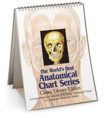 World S Best Anatomical Charts The Worlds Best Anatomical Chart Series Classic Library