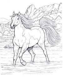 Migliore 20 Cavalli Da Stampare E Colorare Gratis Aestelzer