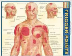 Muscle Pressure Points Chart Trigger Point Therapy Holistic Chiropractic Bodywork