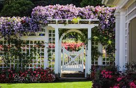 decorative garden fences. white wood lattice fence with flowers in garden decorative fences