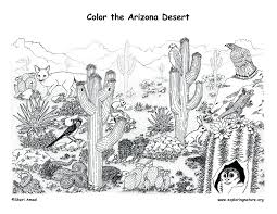 sonoran desert toad coloring page free printable coloring pages