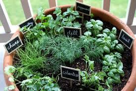 growing herbs container herb garden