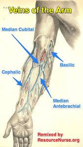 Veins Of The Arm Chart Phlebotomy Medical Laboratory