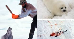 Young russian couple seal opened bleeding