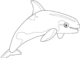 Small Picture Baby Whale Fish Coloring Coloring Pages