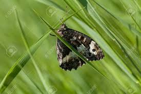 tall green grass field. Colorful Butterfly On A Panicle Of Tall Green Grass, Note Shallow Dept Field Stock Grass