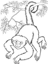 Small Picture Monkey Coloring Pages Hanging Monkey Coloring Pages Monkey 18088