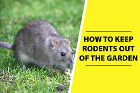how to keep rodents out of garden
