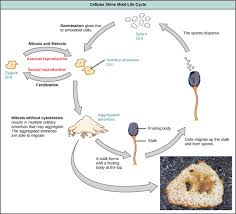 Classification Of Protists Biology Ii